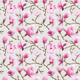 Magnolia Flowers Background Royalty Free Stock Photography