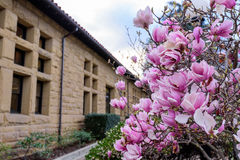 Magnolia flowers besides a house Royalty Free Stock Photos