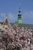 Magnolia flowers and church Stock Photo