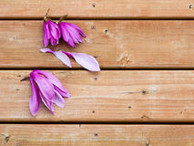 Magnolia flowers on deck Royalty Free Stock Photo