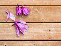 Magnolia flowers on deck Royalty Free Stock Images