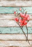 Magnolia flowers decoration rustic wooden background. Magnolia flowers decoration on rustic wooden background stock photo
