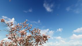 Magnolia flowers and flying pigeons against blue sky, 4K. Hd video stock video footage