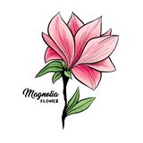 Magnolia flowers hand drawn illustration. Magnolia flower in blossom, beautiful home decor and interior design, isolated illustration vector. Pink floral sketch vector illustration