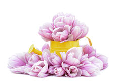 Magnolia flowers. And pail on on white background royalty free stock photos