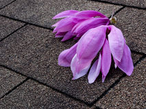 Magnolia flowers on the roof Stock Image