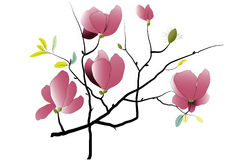 Magnolia flowers on white background.Vector illustration Stock Photo
