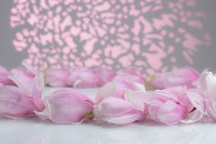 Magnolia flowers on a white board royalty free stock photos