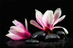 Magnolia Flowers and zen stones. Stock Photos