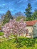 Magnolia garden Stock Images