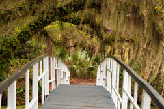 Magnolia Gardens Bridge. The quiet and serene setting at the pond at magnificant magnolia plantation in Charleston, South Carolina Royalty Free Stock Images