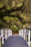Magnolia Gardens Bridge 2. The quiet and serene setting at the pond at magnificant magnolia plantation in Charleston, South Carolina Stock Image