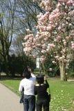Magnolia joven de los pares Fotos de archivo