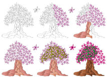 Magnolia, kwitnący drzewo Obrazy Stock