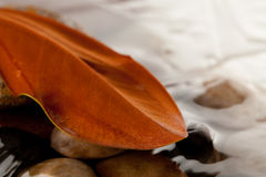 Magnolia leaf on river rocks Stock Images