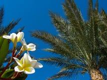 Magnolia op de achtergrond van palmen en blauwe hemel royalty-vrije stock foto's