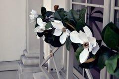 Magnolia på fönster Royaltyfri Fotografi