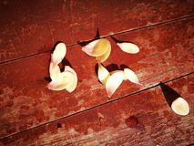The magnolia pedals lying on the wooden table Royalty Free Stock Photo