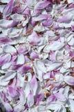 Magnolia petals on the grass Stock Photo