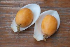 Magnolia petals in Loquat royalty free stock images