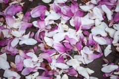 Magnolia Petals Stock Photography