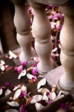Magnolia Petals on Stairway. Fallen Magnolia Petals on Stairway stock photo