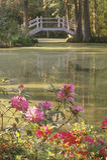 Magnolia Plantation garden of the Old South, Charleston, SC Royalty Free Stock Image