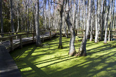 Magnolia Plantation and gardens, Charleston SC Stock Photo