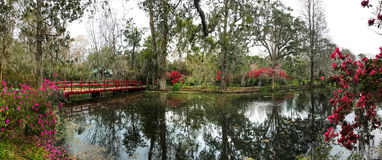 Magnolia Plantation. The gardens at Magnolia Plantation in Charleston, South Carolina Royalty Free Stock Photo