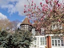Magnolia que florece en la primavera imagenes de archivo