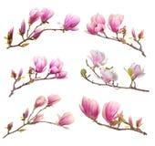 Magnolia rosada Imágenes de archivo libres de regalías