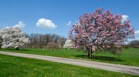 Magnolia's en Wolken Stock Afbeelding