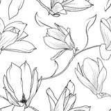 Magnolia sakura flowers branch seamless pattern. Magnolia sakura spring bush tree branch seamless pattern. Beautiful flowers buds black and white outline. Vector Royalty Free Stock Photos