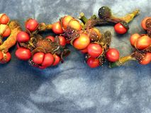 Magnolia seeds Stock Photos
