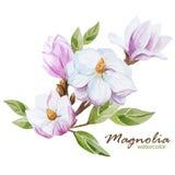 Magnolia set Stock Photos