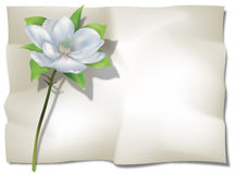 Magnolia on Sheet Stock Images