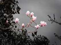 Magnolia sopra acqua fotografia stock