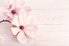 Magnolia flower on white wooden background. Copy space stock photo