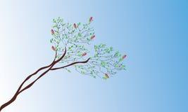 Magnolia in spring Stock Photos