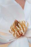 Magnolia stelalta Royalty Free Stock Images
