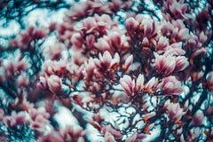 Magnolia in swirly royaltyfri fotografi