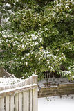 Magnolia Tree Behind Snow Covered Fence Stock Images