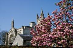 Magnolia tree and church Stock Photos