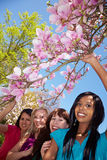Magnolia tree with four women royalty free stock photo
