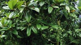 Magnolia tree in park stock footage