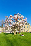 Magnolia tree in Suttgart Stock Images