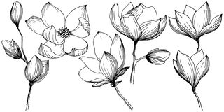 Magnolia in a vector style isolated. vector illustration