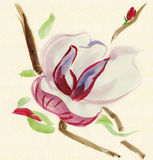 Magnolia, watercolor. Magnolia watercolor drawing in traditional Chinese style stock illustration