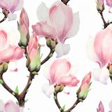 Magnolia. Watercolor. Seamless pattern. Branches are flowering. Wallpaper. Use printed materials, signs, posters, postcards, packaging stock image