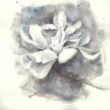 Magnolia flower watercolor painting illustration greeting card. Magnolia white flower watercolor painting illustration greeting card royalty free stock images